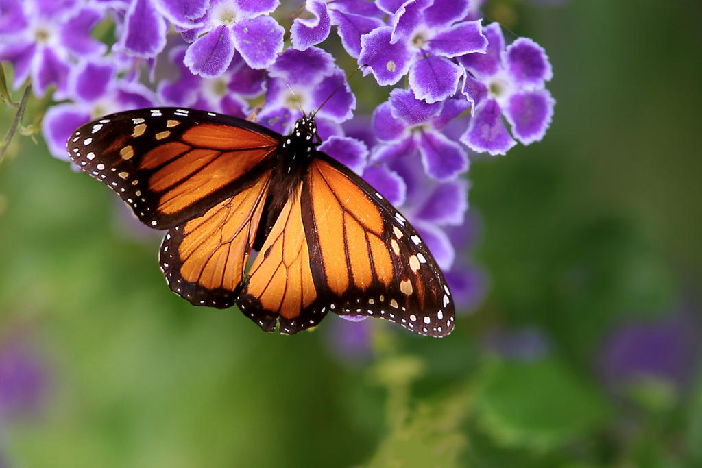 flower nectar quotes