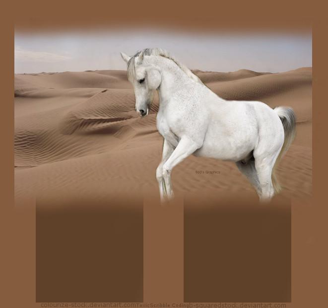 Horse In The Desert by furlong910
