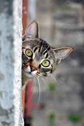 Cat next door by tomsumartin