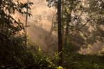 Moravske lesy II