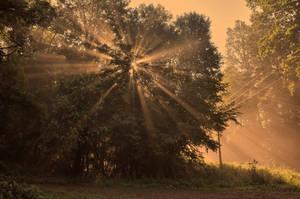 Moravske lesy III by tomsumartin