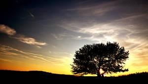Za stromem by tomsumartin