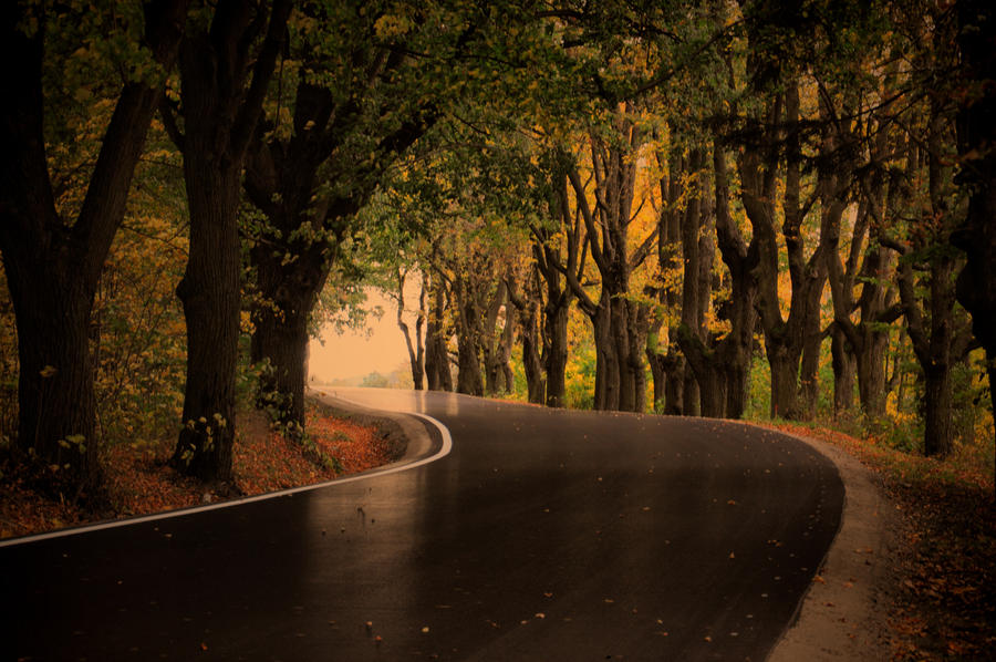 Autumn Road by tomsumartin