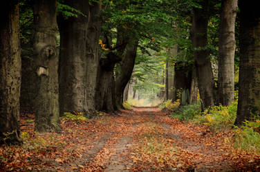 I like autumn by tomsumartin
