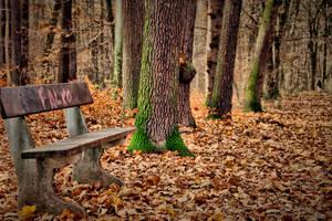 End of a beautiful season by tomsumartin