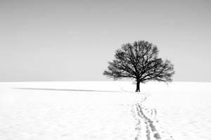 Around the tree by tomsumartin