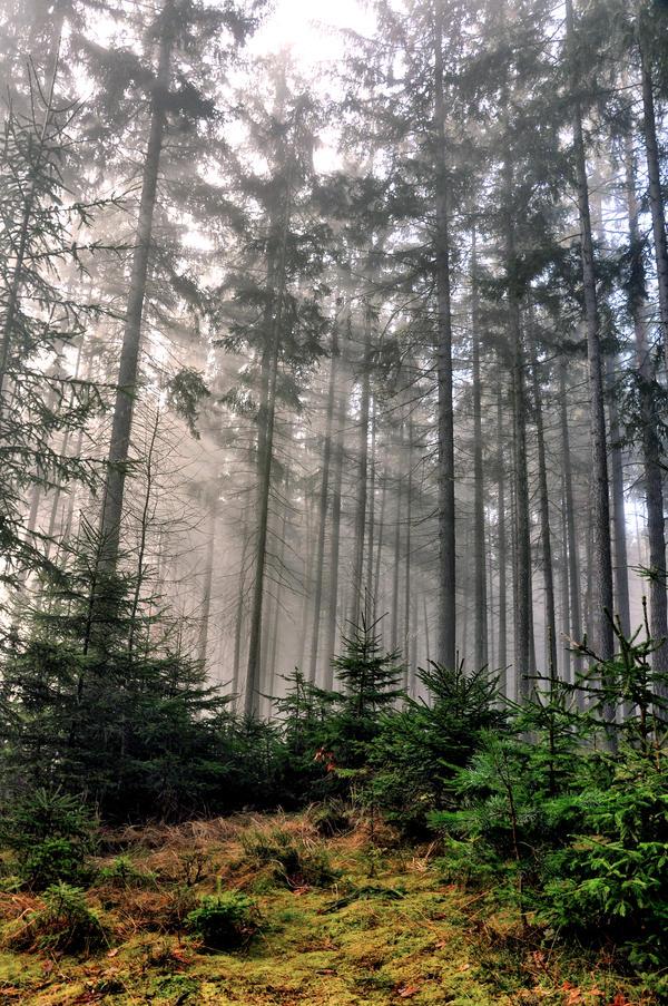 Forest Symphony by tomsumartin