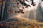Podzimni dopoledne