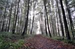 Hura do lesa