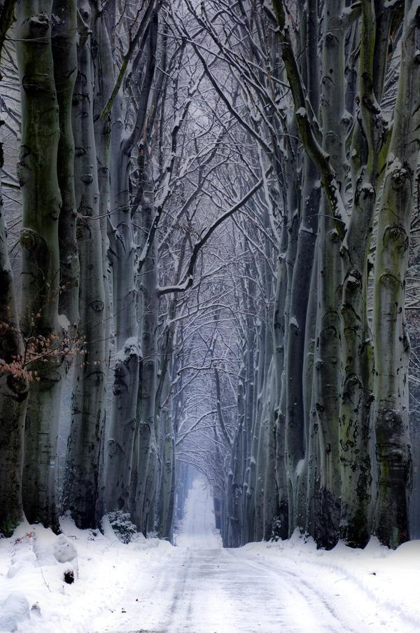 Zimni Haugwitzova alej by tomsumartin