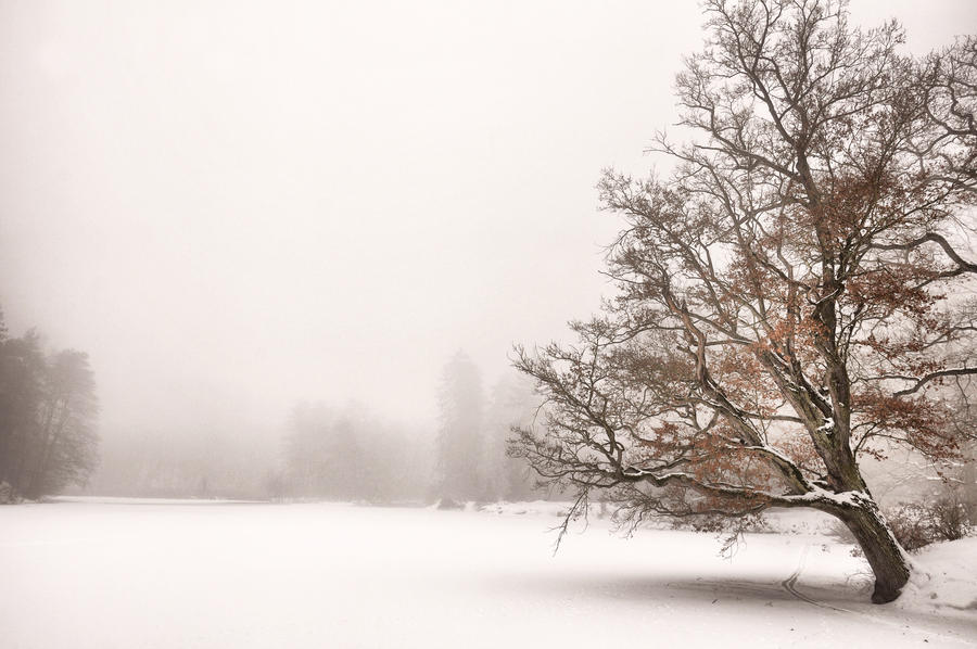 Winter Dream III by tomsumartin