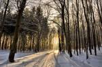 Winter colour II