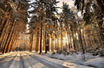 Winter colour III