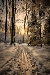 The ski trail by tomsumartin