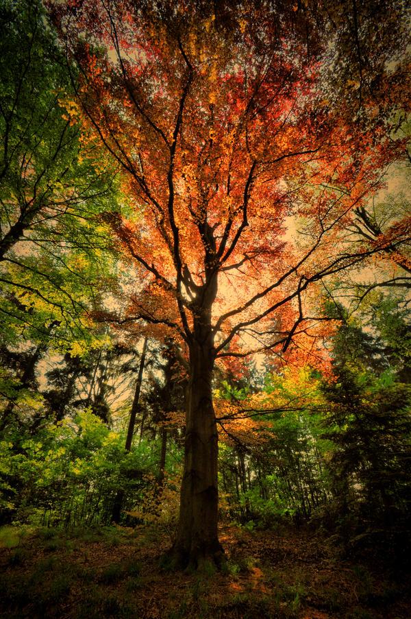 TREE by tomsumartin