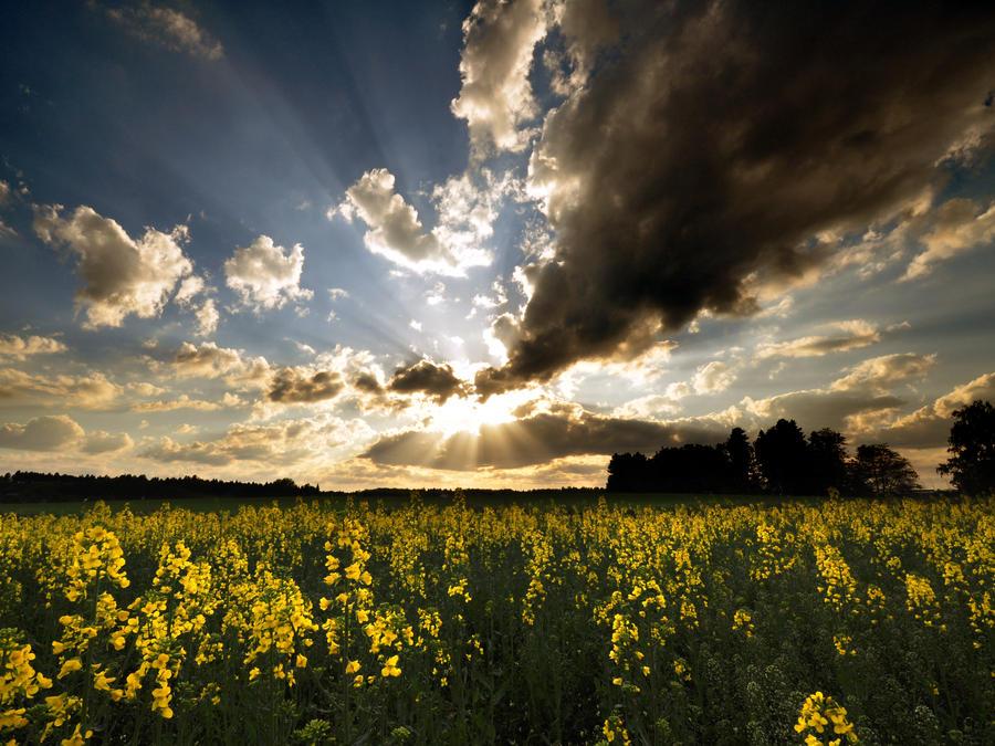Slunecni vecer by tomsumartin