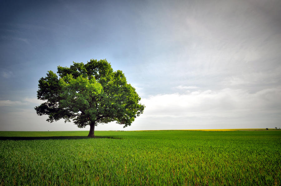 Pamatny strom by tomsumartin