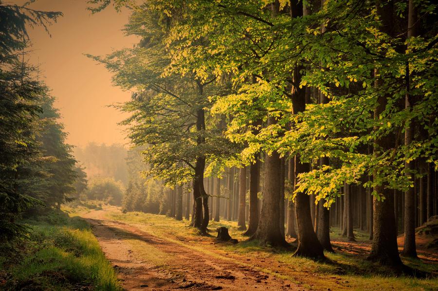 Tam u lesa by tomsumartin