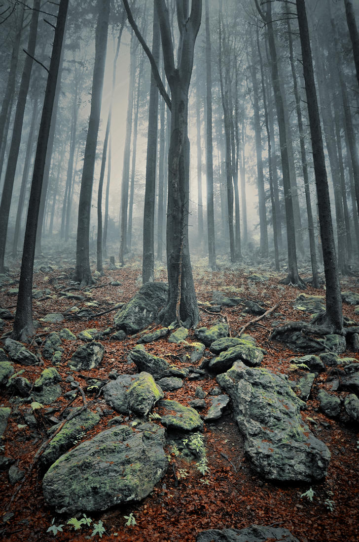 Kouzlo lesa II by tomsumartin