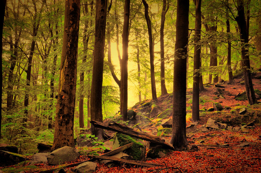 Autumn magic by tomsumartin