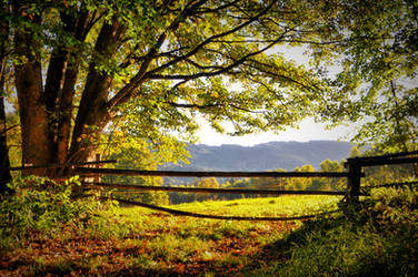 Ordinary autumn day by tomsumartin