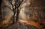 My journey to light