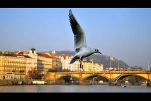 Prague wings by tomsumartin