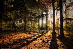 Summer in December II by tomsumartin