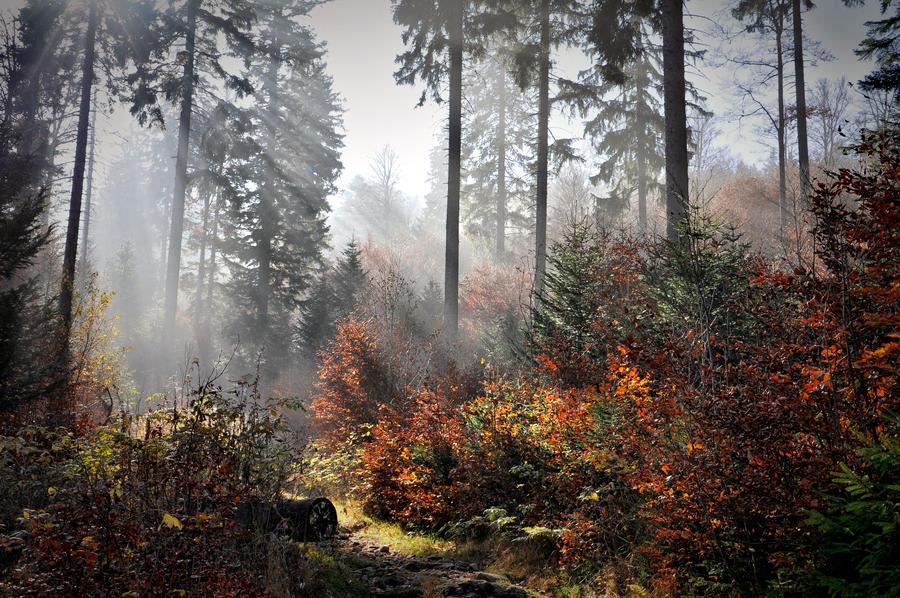 Krasa podzimu by tomsumartin