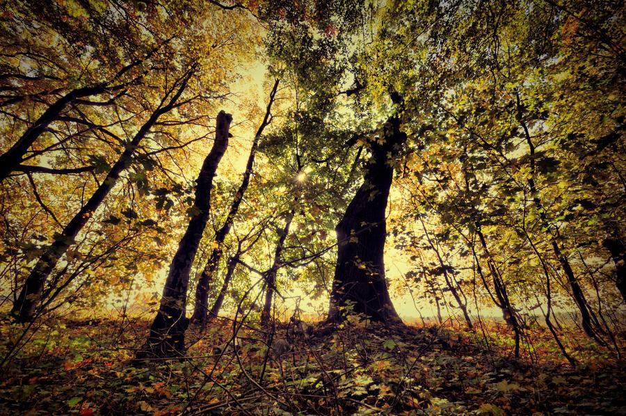 Ten strom by tomsumartin