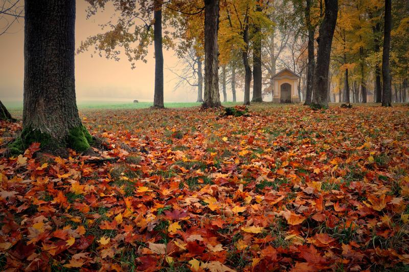 Podzim 2013 by tomsumartin