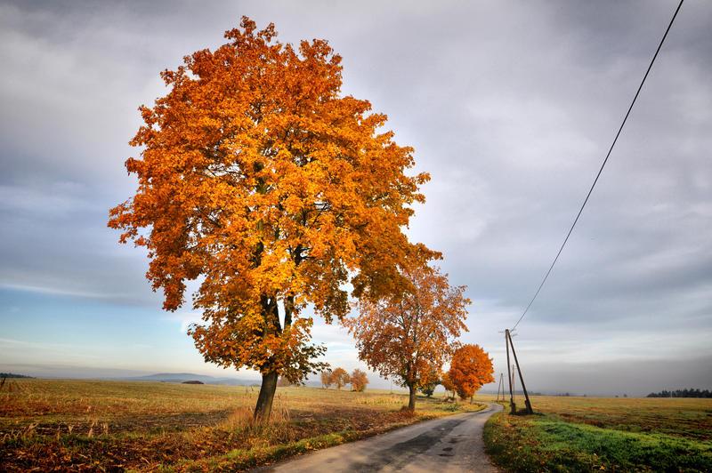 Podzim 2013 V by tomsumartin