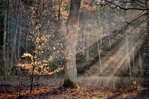 Last autumn rays by tomsumartin