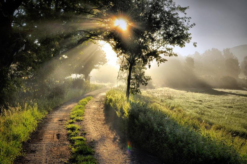 Letni rano by tomsumartin
