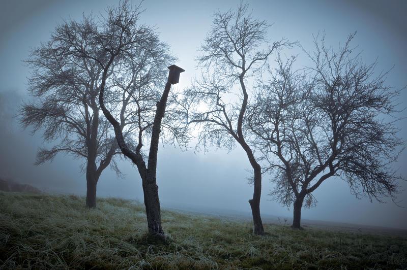 Zimni sad by tomsumartin