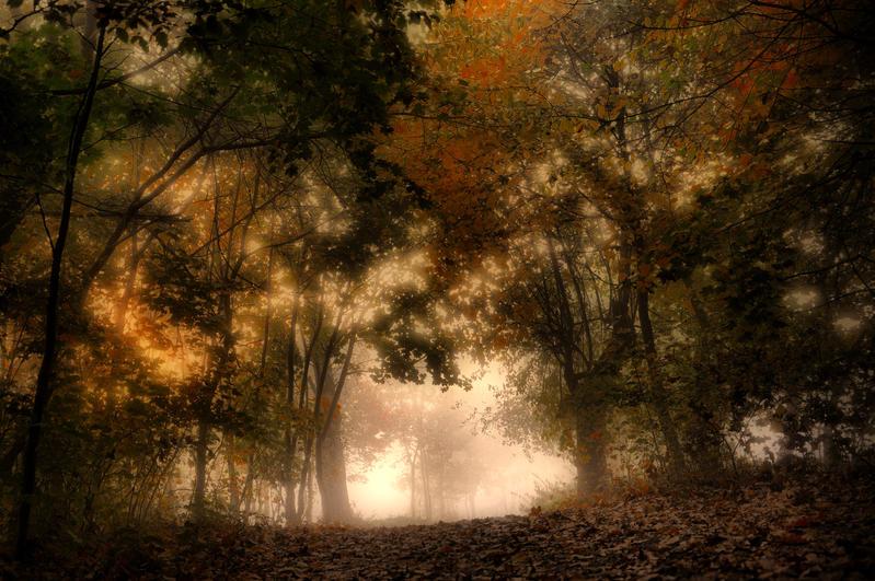 Podzimni rano by tomsumartin