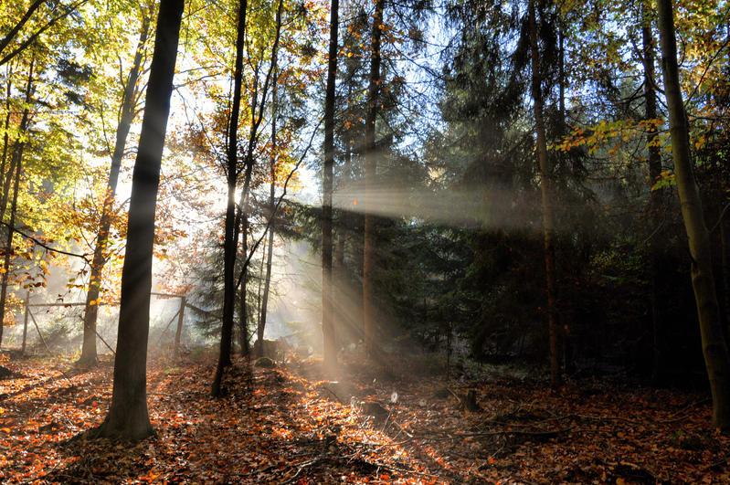 Autumn III by tomsumartin