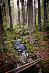 Sumava woods