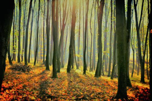 Podzimni sen