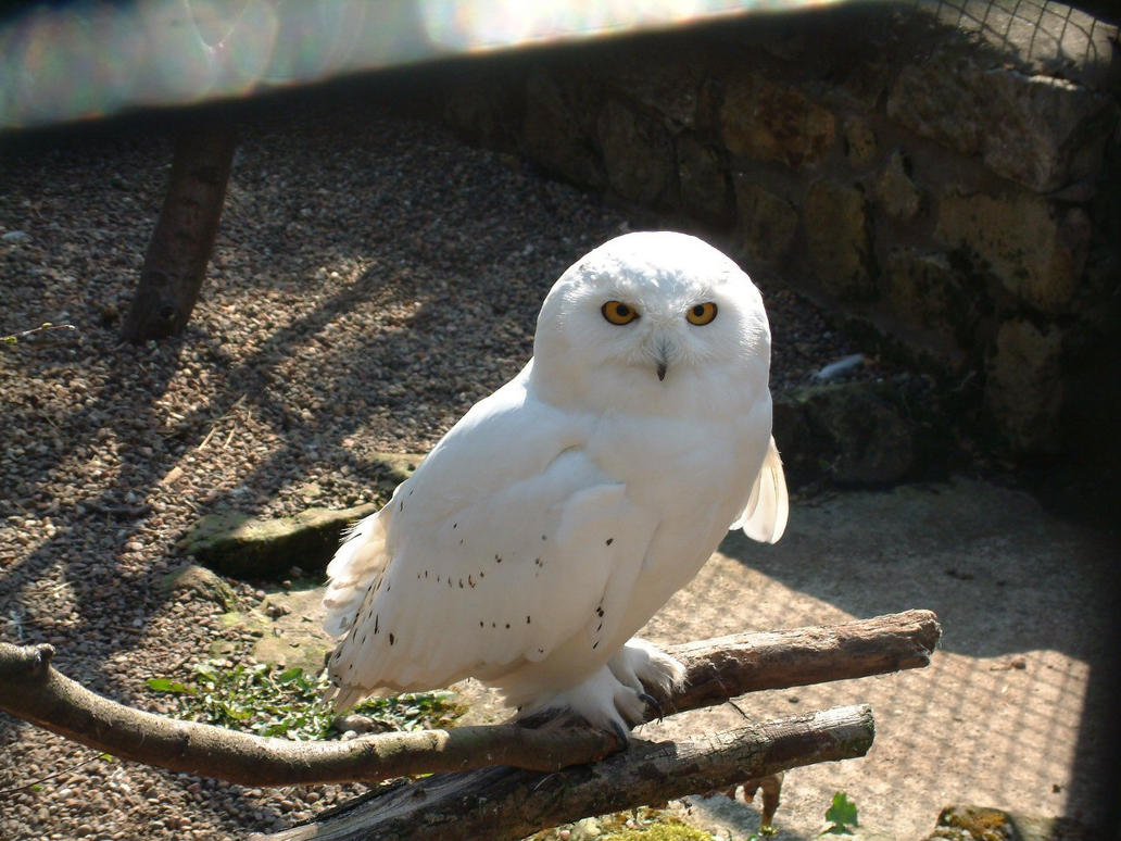white owl chat White owl intuitive arts, las vegas, nevada 154 likes akashic records readings, zen tarot readings the akashic records are the cosmic library for.