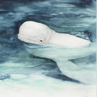 Beluga whale by acg723
