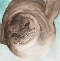 Seal version2 by acg723