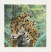 Jaguar by acg723