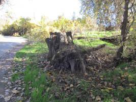 tree stump stock by acg723