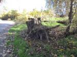 tree stump stock