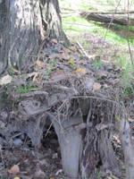tree stump stock detail by acg723