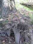 tree stump stock detail