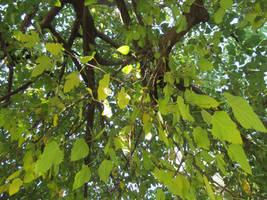 Leaves 1 by acg723
