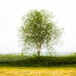 One tree - five angles