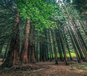 Sequoia 2 by ekstradicija